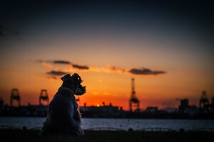 Dog Sunset Silhouette 4k