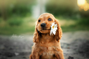 Dog With Flower In Mouth Wallpaper
