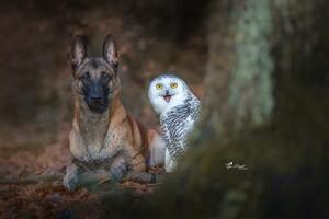 Dog With Owl