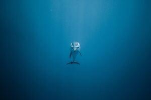 Dolphin 5k