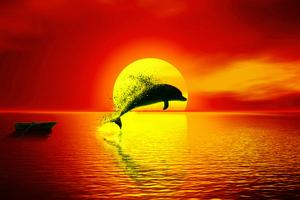 Dolphin Dispersion Sunset 4k