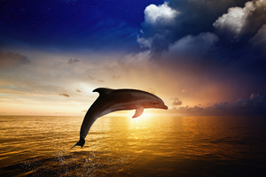 Dolphin Jumping Wallpaper