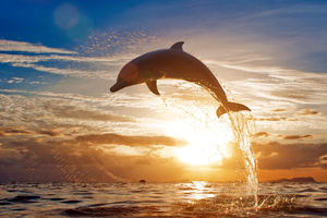 Dolphin Jumping Out Of Water Wallpaper