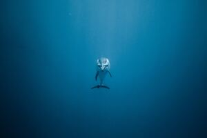 Dolphin Underwater 5k Wallpaper