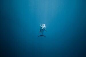 Dolphin Underwater 5k