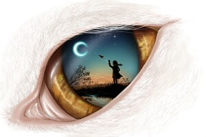 Dream In Eye