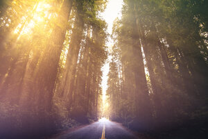 Driving Through Red Woods 5k Wallpaper