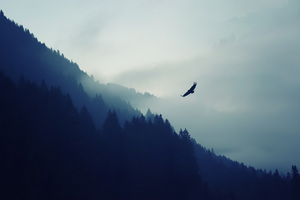 Eagle Over The Mountain