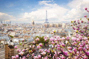 Eiffel Tower France Flowers Beautiful 4k Wallpaper