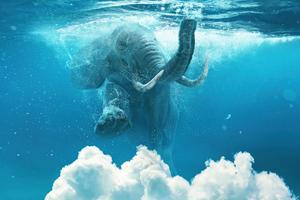Elephant Under Water Manipulation 4k
