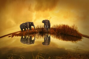 Elephants Thailand Wallpaper