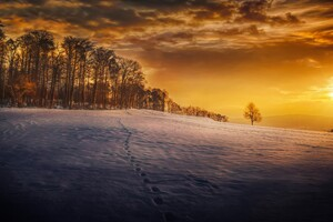Evening Snow Landscape Trees Wallpaper