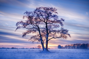 Evening Winter Trees Snow 5k Wallpaper