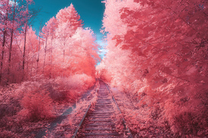 Fairy Tail Autumn Path Wallpaper