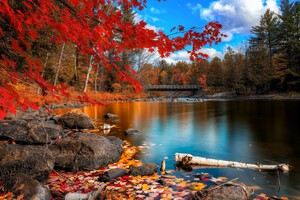 Fall Foliage Wallpaper