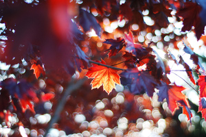 Fall Leaves Trees Sunlight Colorful Sun Beams