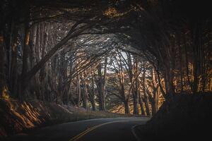 Fall Road Trees Landscape Wallpaper