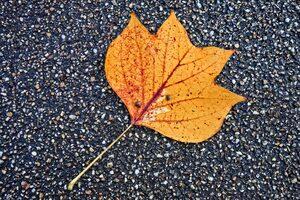 Fallen Leaf Autumn 5k