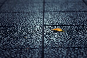 Fallen Leaf Autumn