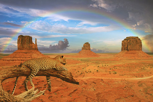 Fantasy Leopard Rainbow Wallpaper