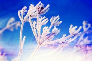 Fantasy Winter