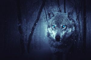 Fantasy Wolf 5k Wallpaper