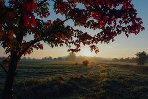 Farmland Autumn Trees 5k Wallpaper