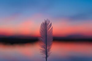 Feather Focus Blur Sunset 5k Wallpaper