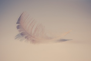Feather Soft 5k Wallpaper