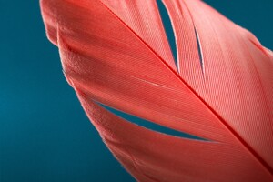 Feathers Macro Wallpaper