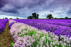 Field Flowers Wallpaper