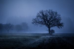 Field Fog Trees Blue Weather Cold 4k 5k Wallpaper