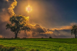 Field Trees Grass Sky Wallpaper
