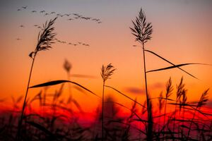 Field Weeds Sunrise Wallpaper