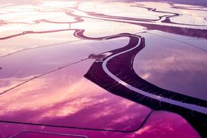 Fields Landscape Abstract