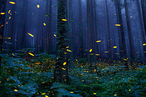 Fireflies Forest 4k