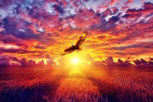 Flaming Eagle Golden Hours 4k Wallpaper