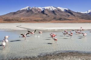 Flamingo Birds 5k Wallpaper