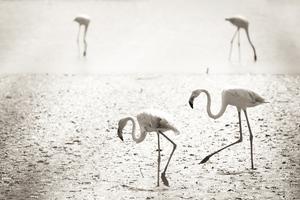 Flamingos At Camargue France 4k Wallpaper