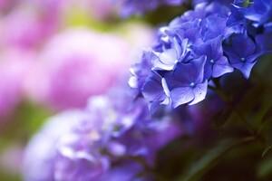 Flower 4k