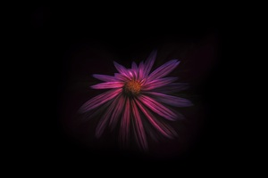 Flower Dark Background 4k Wallpaper