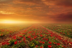 Flower Fields Nature