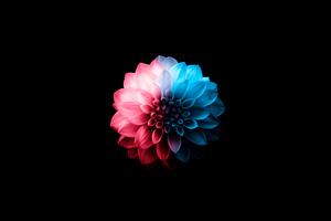 Flower Oled Dark 5k Wallpaper