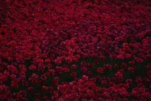 Flowers Bed 5k Wallpaper