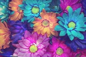 Flowers Colorful Petals