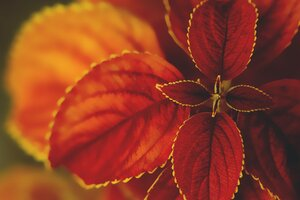 Flowers Macrography