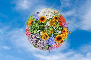 Flowers Manipulation Wallpaper