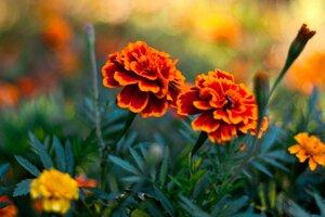 Flowers Pair