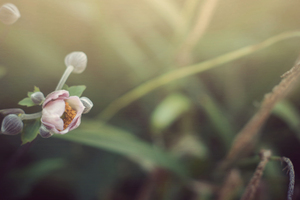 Flowers Photography Wallpaper