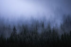 Fog Dark Forest Tress Landscape 5k